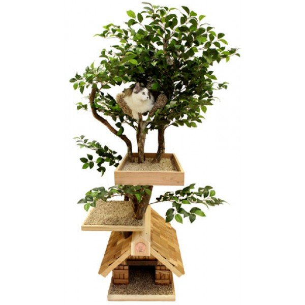 Le match arbre chat naturel vs arbre synth tique - Arbre a chat en bois naturel ...