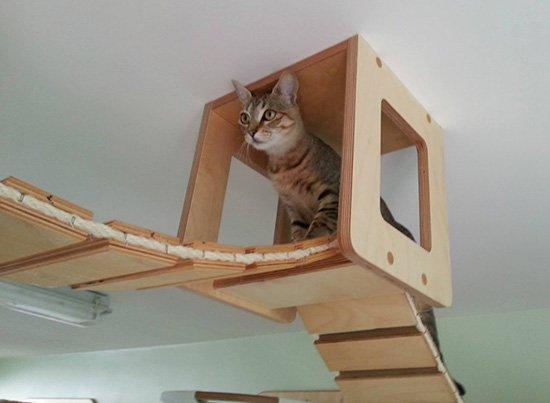 le-chat-samuse Le mobilier pour chat GOLDTATZE: votre félin va en rêver!