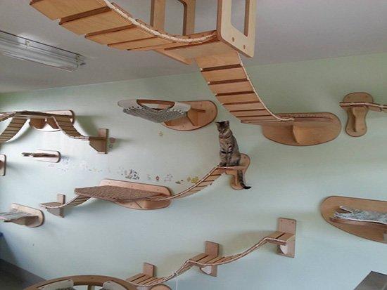 mobilier-chat-au-plafond Le mobilier pour chat GOLDTATZE: votre félin va en rêver!