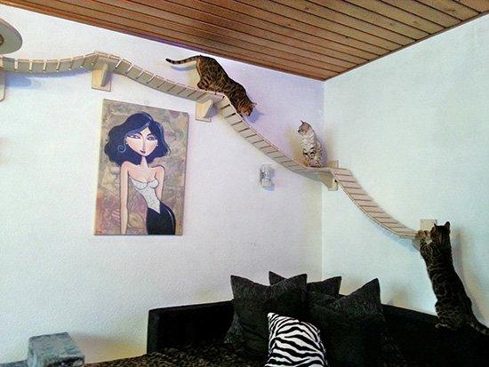 mongroschat Le mobilier pour chat GOLDTATZE: votre félin va en rêver!