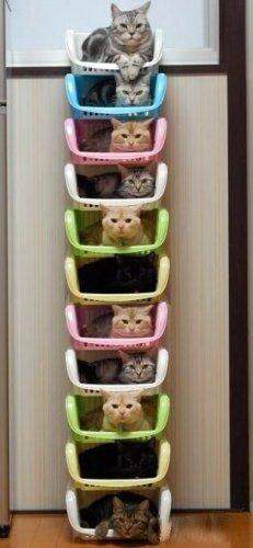 rangements boite chats a l'intérieur