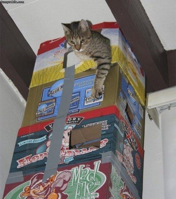 tour en forme de bière pour chat