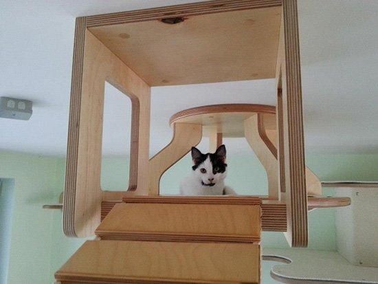 un-chat-heureux Le mobilier pour chat GOLDTATZE: votre félin va en rêver!