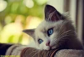 choisir le nom dun chat - Comment choisir un nom pour son chaton? Quelques conseils