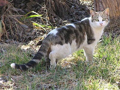 9 m thodes pour loigner les chats de votre jardin - Solution pour eloigner les chats du jardin ...