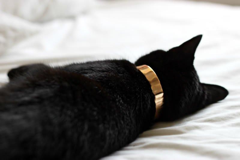collier pour chatons - Collier / harnais pour chats: avantages et inconvénients
