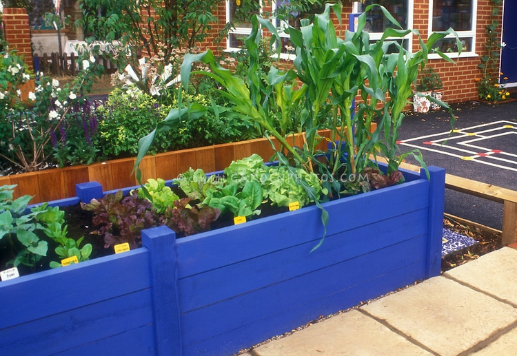 crédit photo© The Raised Bed Gardening