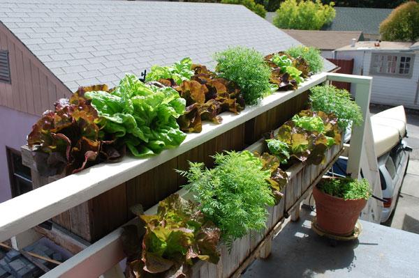 grow-it-organically.com