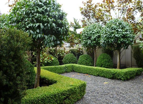 haie de jardin moderne avec haies persistantes de thuyas comment crer lintimit dans