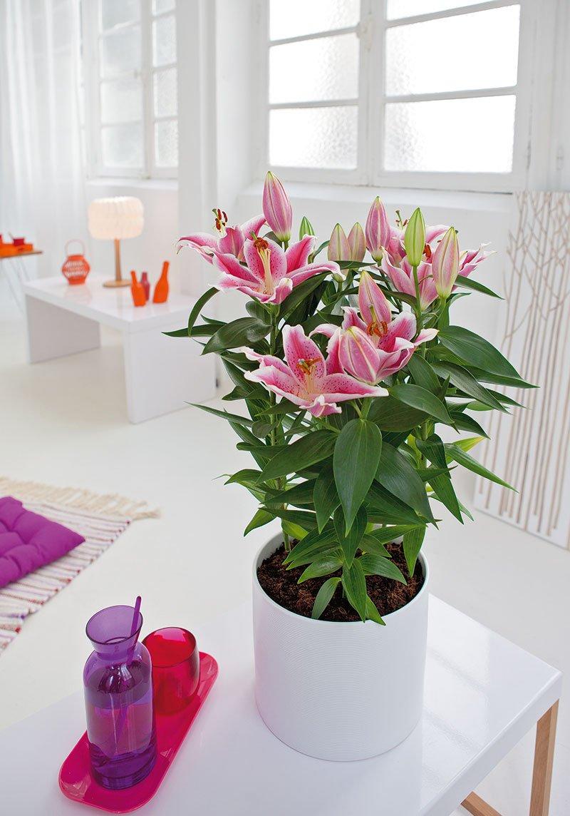 5 accessoires d co qui d fient le temps et les modes for Fushia plante interieur ou exterieur