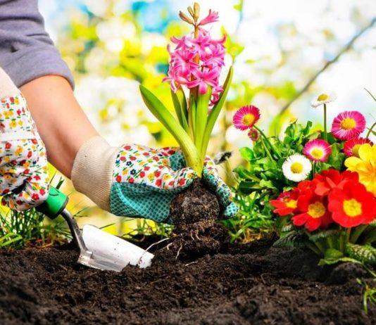 Guide maison jardin archives - Quel legume planter en juin ...