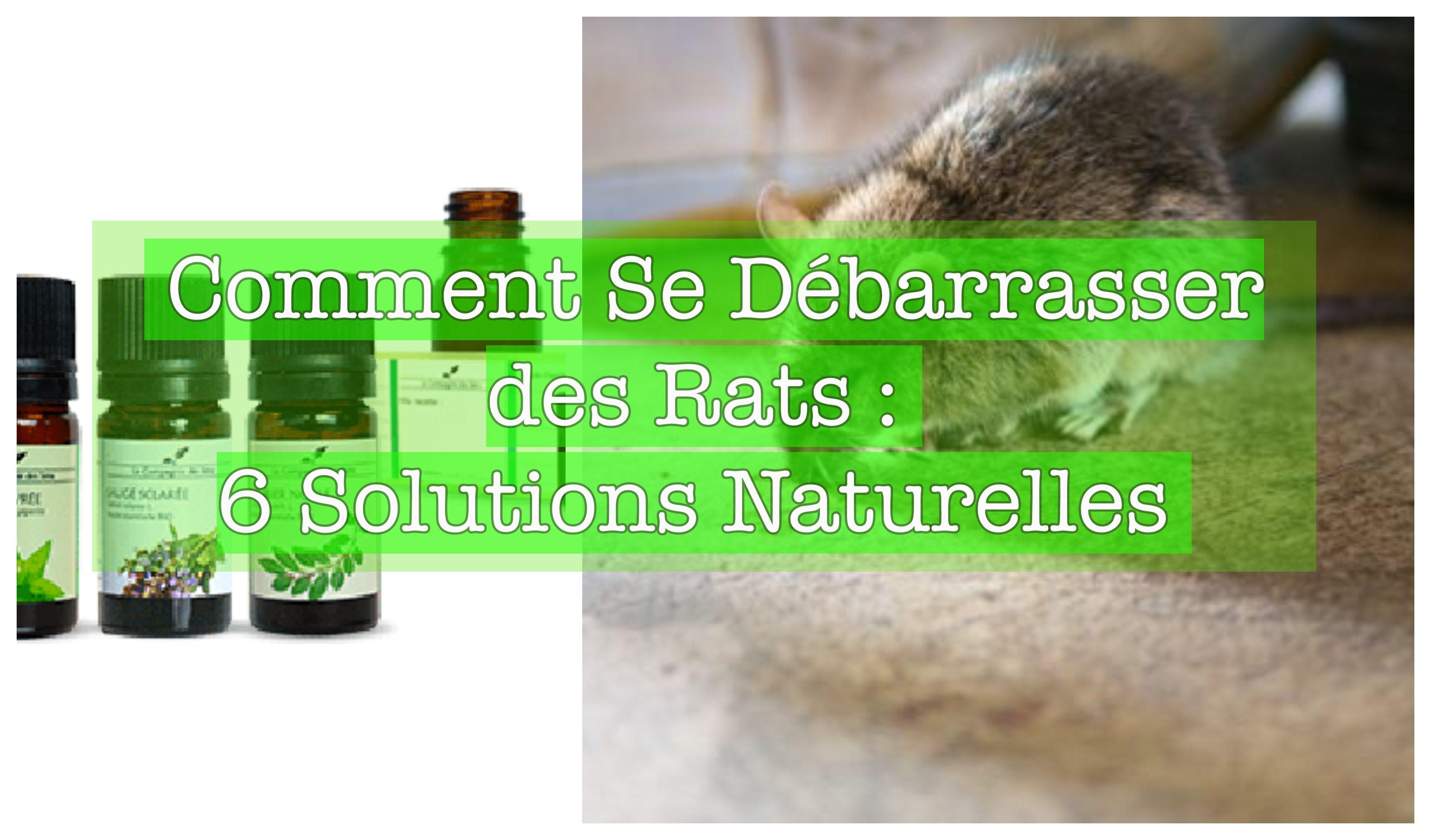 comment se d barrasser des rats 6 solutions naturelles. Black Bedroom Furniture Sets. Home Design Ideas